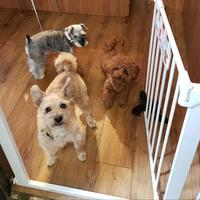 グロース、ペット飼育可の仲介業
