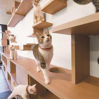 大建工業、猫共生用の建材拡充