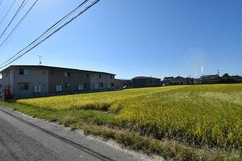 田畑の写真